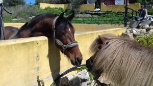 new horses at Ranch Siesta Los Rubios Estepona