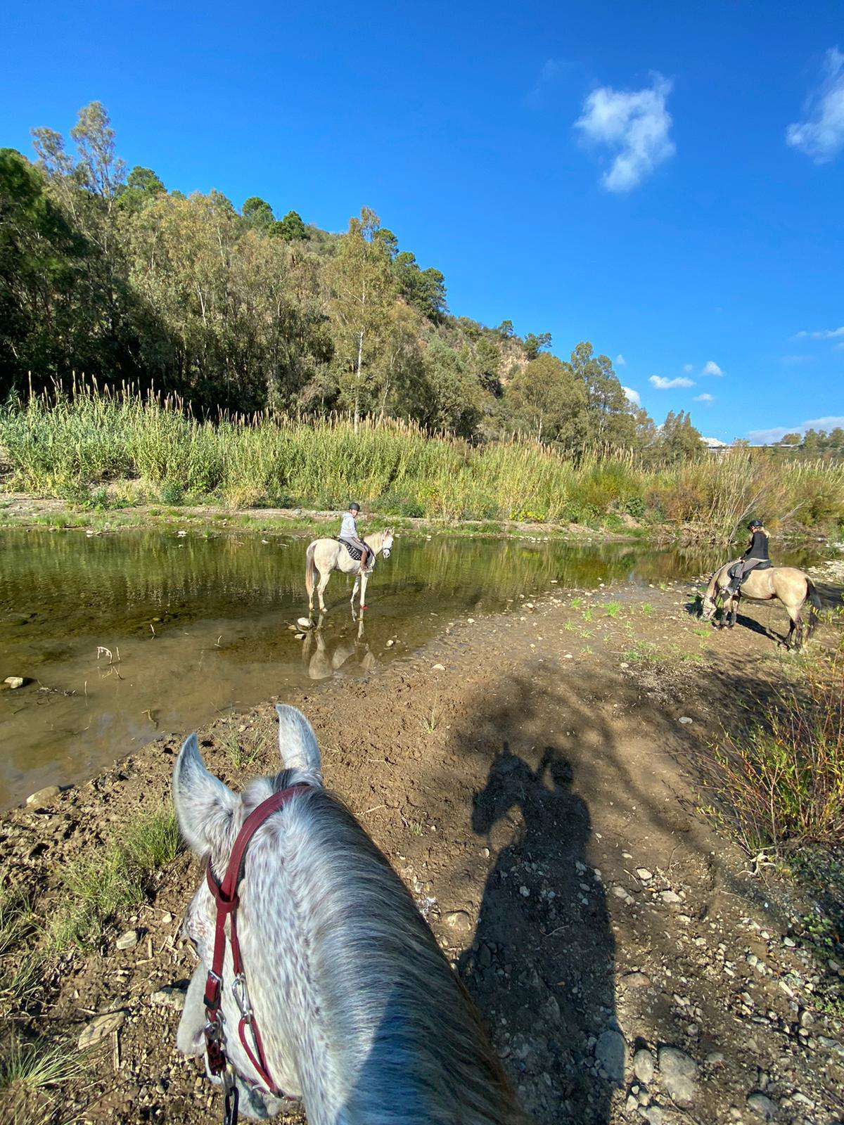 River ride Estepona with Ranch Siesta Los Rubios