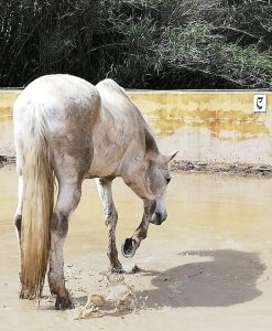 Ranch Siesta Los Rubios Estepona horse riding weather in Spain muddy horses