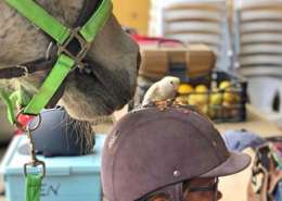 Ranch Siesta Los Rubios Estepona horse riding stables has a little bird visitor