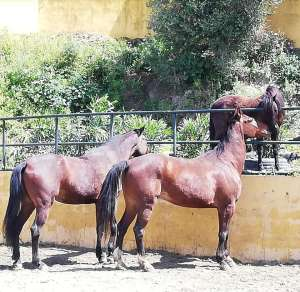 Ranch Siesta Los Rubios horse friendships during lockdown in Spain
