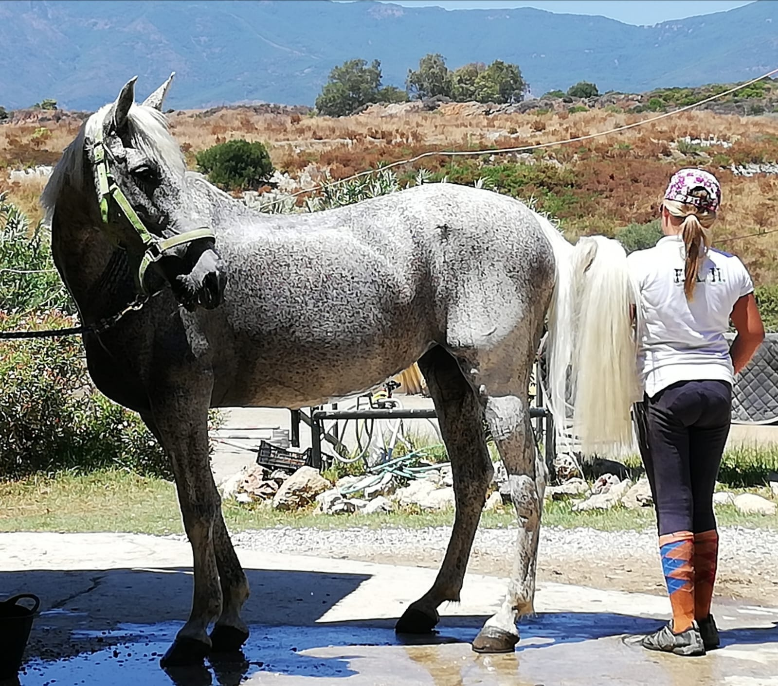 Hope the rescue horse at Ranch Siesta Los Rubios