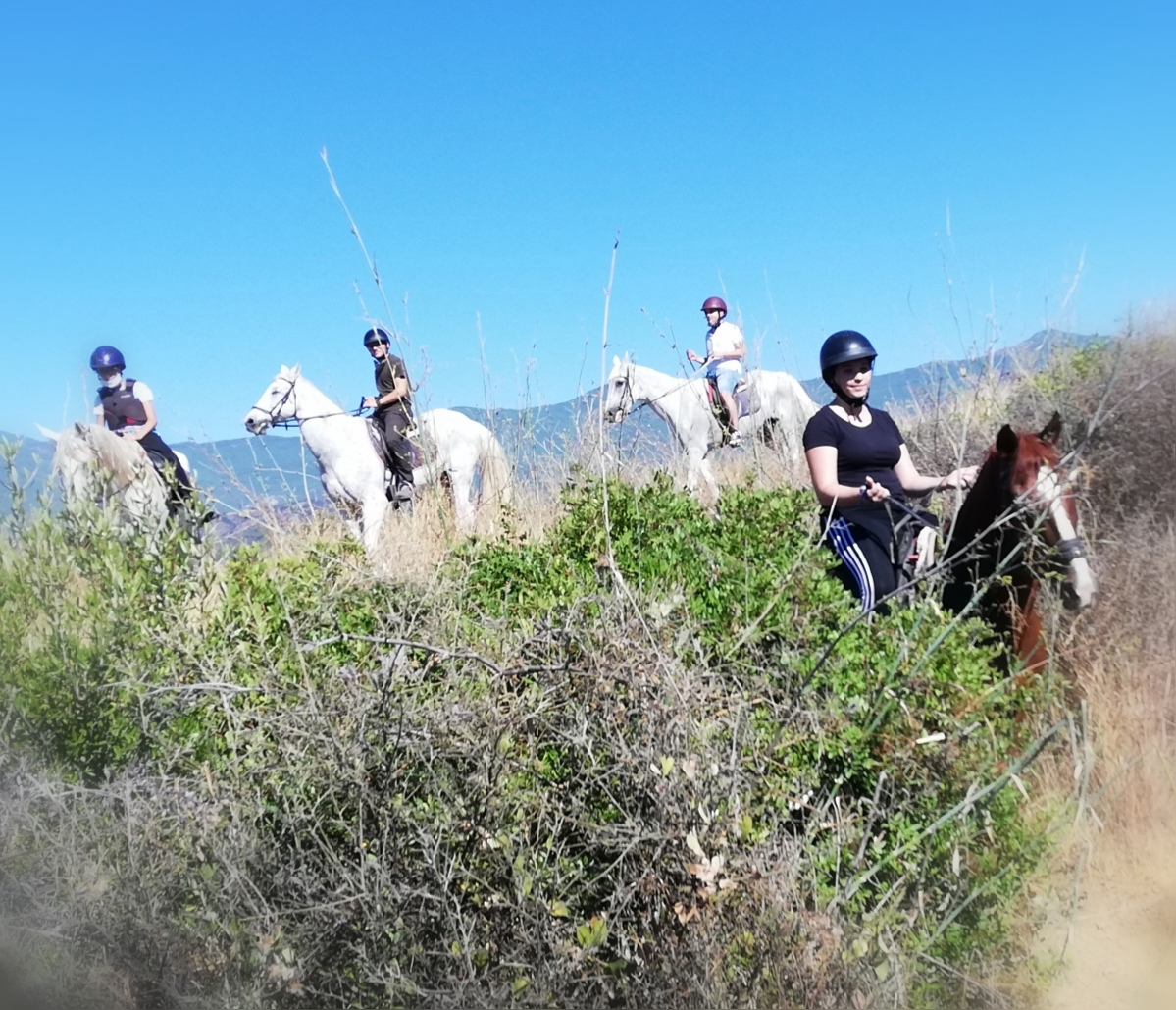 Saddle up experience - beginners horse riding at Ranch Siesta Los Rubios Estepona