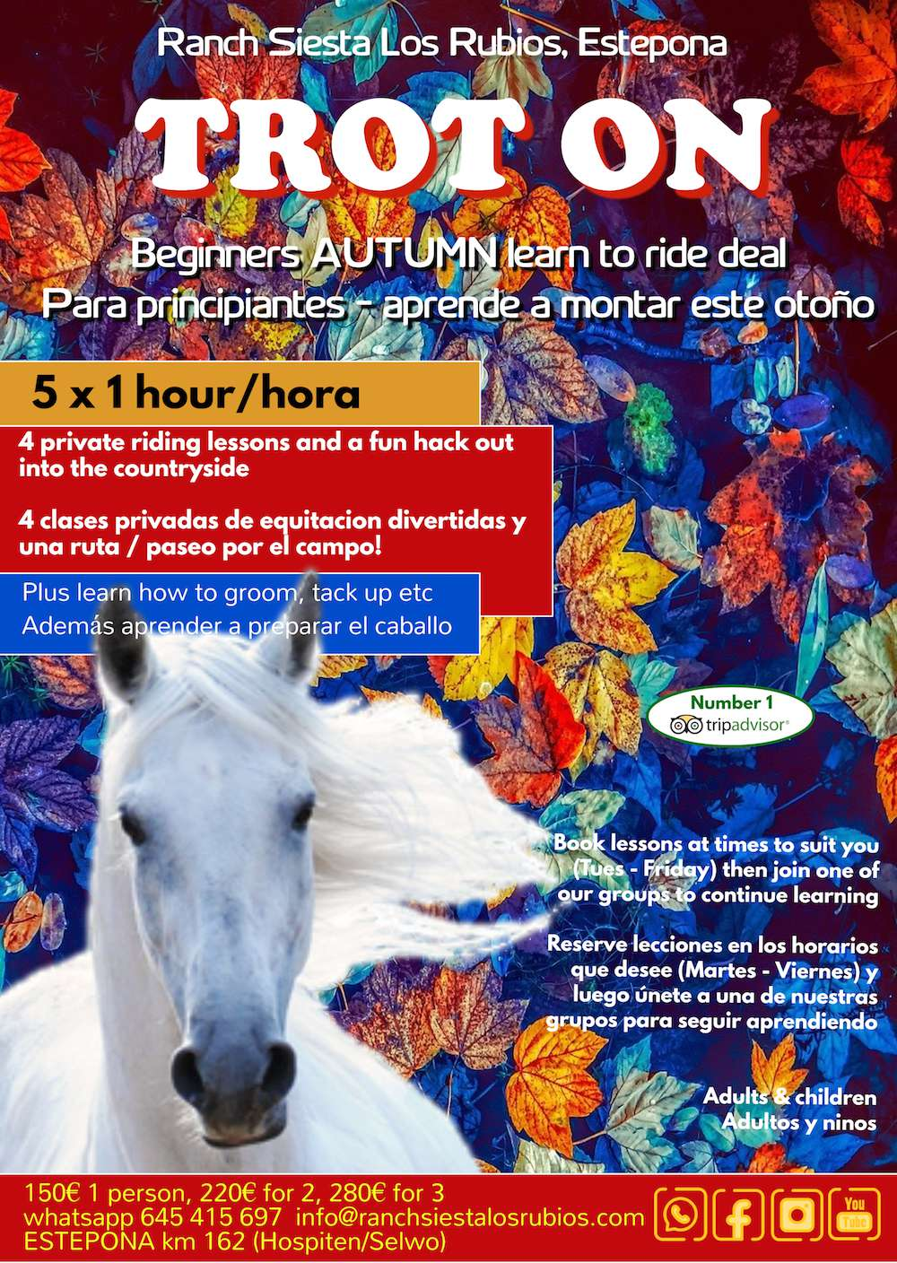 Learn to horse ride at Ranch Siesta Los Rubios in Estepona