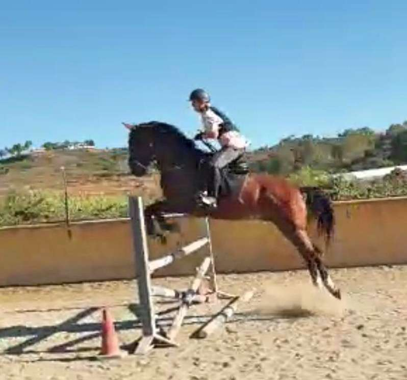 Adult jumping lessons at Ranch Siesta Los Rubios Estepona